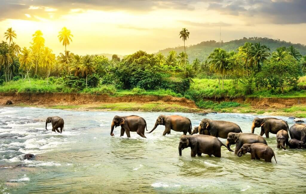 Elephants dans la riviere au sri lanka